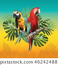 Illustration polygonal drawing of two macaw birds. 46242488