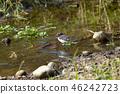 禽 野生鸟类 野鸟 46242723