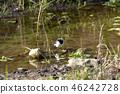 禽 野生鸟类 野鸟 46242728