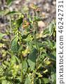 植物 植物学 植物的 46242731