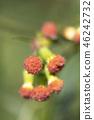 植物 植物学 植物的 46242732