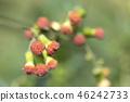 植物 植物学 植物的 46242733