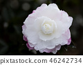 自然 植物 植物学 46242734
