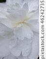 自然 植物 植物学 46242735
