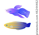 Betta Fish and Blue Striped Tamarin Wrasse Poster 46244462