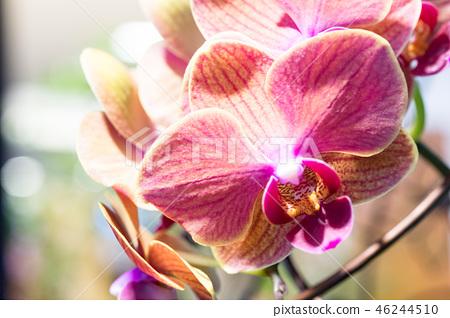 紫色兰花花。一朵爬行的兰花,各种各样的花。阿里(Ari),花蕾,花蕾,flower片。 46244510