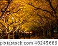 東京イ銀杏樹綠樹成蔭,金谷蓋恩 46245669