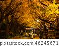 東京イ銀杏樹綠樹成蔭,金谷蓋恩 46245671