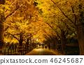 《Tokyo》Light-up of ginkgo trees, Jingu Gaien 46245687