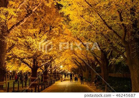 """""""도쿄도""""은행 나무 가로수의 라이트 업 진구가 이엔 46245687"""