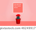 Small cactus in a flowerpot on a trendy background. 46249917