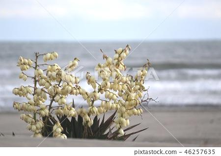 해변에 피는 꽃 46257635