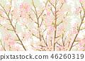 ดอกซากุระบาน,ซากุระบาน,ฤดูใบไม้ผลิ 46260319