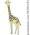 동물 기린 46264191