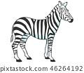 동물 얼룩말 46264192