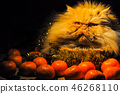 Funny fluffy red cat with tangerines on New Year 46268110