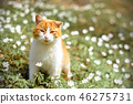 Beautiful red cat rests in wild spring flowers 46275731