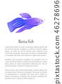 Betta Fish, Siamese Fighting Fish Graphic Icon 46278696