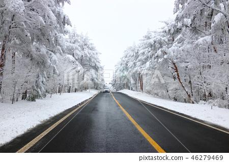 도로,한라산 가는길,설경,눈꽃,눈, 46279469