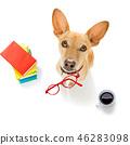 animal, glasses, terrier 46283098