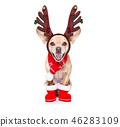 christmas santa claus reindeer dog 46283109