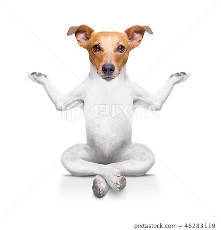 yoga dog 46283119