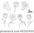 flower, background, botanical 46283400
