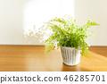 관엽 식물 46285701