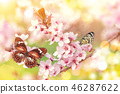 Spring blossoms with exotic butterfly. 46287622