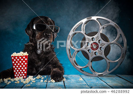 Black funny dog withRetro film production accessories. 46288992
