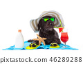 Black mutt dog posing with colorful cocktail. 46289288