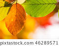 Autumn leaves background 46289571