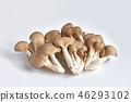 느타리 버섯 (느타리 버섯) 46293102
