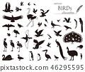 剪影鳥類的材料集合 46295595