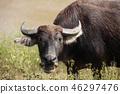 Buffalo full. 46297476