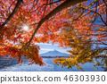 ภูเขาฟูจิ,ภูเขาไฟฟูจิ,ต้นเมเปิล 46303930
