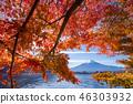 ภูเขาฟูจิ,ภูเขาไฟฟูจิ,ต้นเมเปิล 46303932