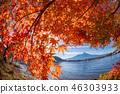 ภูเขาฟูจิ,ภูเขาไฟฟูจิ,ต้นเมเปิล 46303933