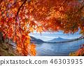 ภูเขาฟูจิ,ภูเขาไฟฟูจิ,ต้นเมเปิล 46303935