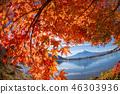 ภูเขาฟูจิ,ภูเขาไฟฟูจิ,ต้นเมเปิล 46303936