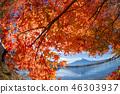 ภูเขาฟูจิ,ภูเขาไฟฟูจิ,ต้นเมเปิล 46303937