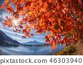 ภูเขาฟูจิ,ภูเขาไฟฟูจิ,ต้นเมเปิล 46303940