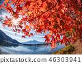 ภูเขาฟูจิ,ภูเขาไฟฟูจิ,ต้นเมเปิล 46303941