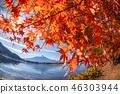 ภูเขาฟูจิ,ภูเขาไฟฟูจิ,ต้นเมเปิล 46303944
