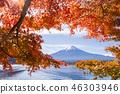 ภูเขาฟูจิ,ภูเขาไฟฟูจิ,ต้นเมเปิล 46303946
