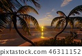 Palms on the tropical beach 3d rendering 46311152