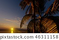 Palms on the tropical beach 3d rendering 46311158