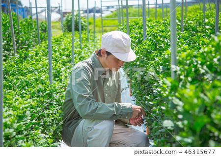 농업 남성 46315677