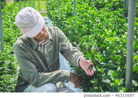 Agriculture men 46315697