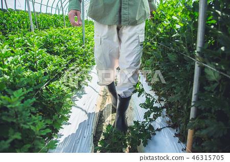 농업 남성 46315705